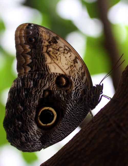 owl butterfly photo by david whittworth yorkshire web and photography services ywps